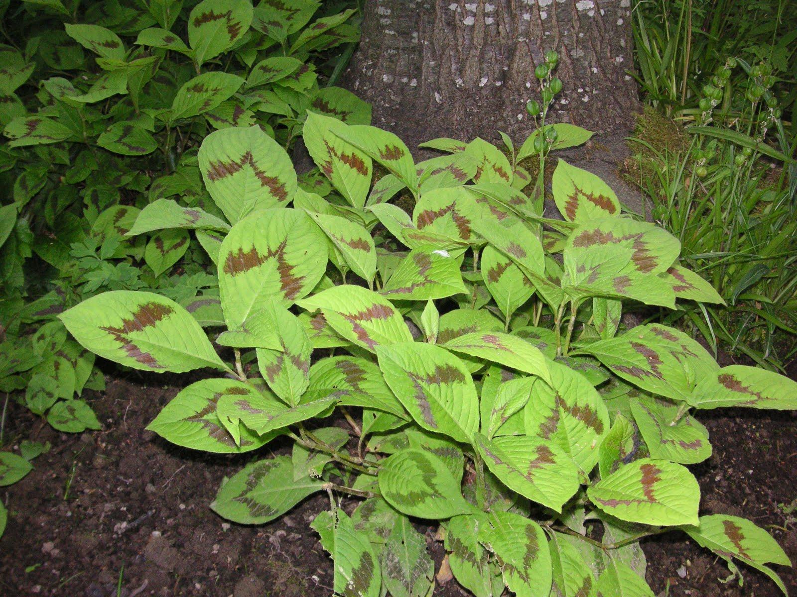 Tovara That Bloomin 39 Garden
