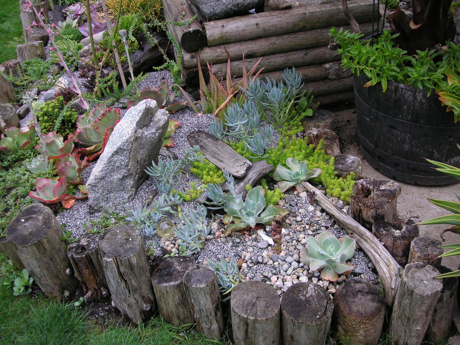 Succulents that bloomin 39 garden for Deco bois flotte decoration