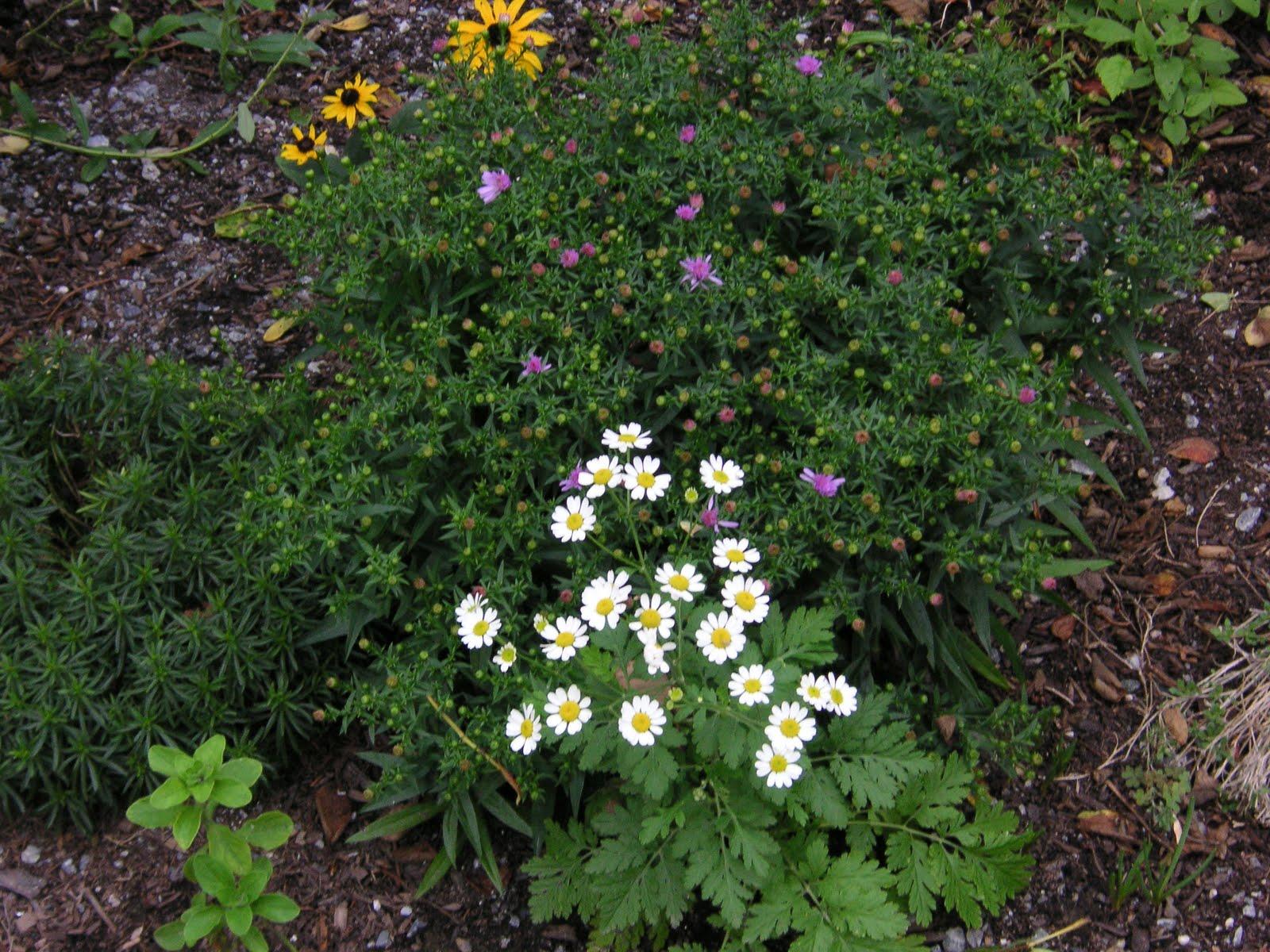 Alstromeria That Bloomin 39 Garden