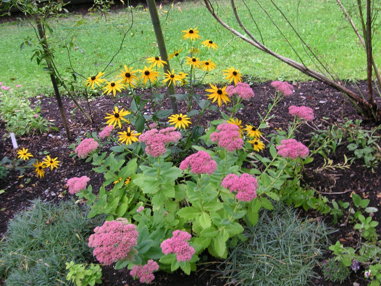 Dill That Bloomin 39 Garden