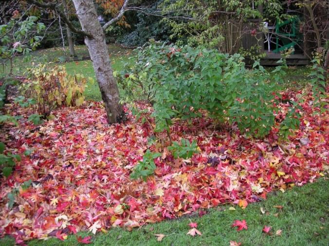 November garden tasks for Delta