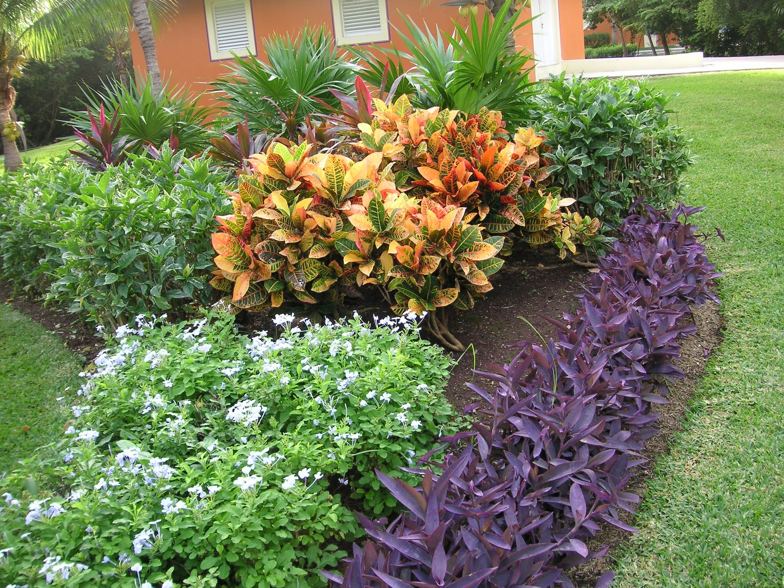 Flowers Of The Yucatan Peninsula That Bloomin 39 Garden