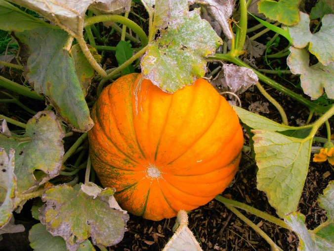 Managing Pest and Disease in the Vegetable Garden