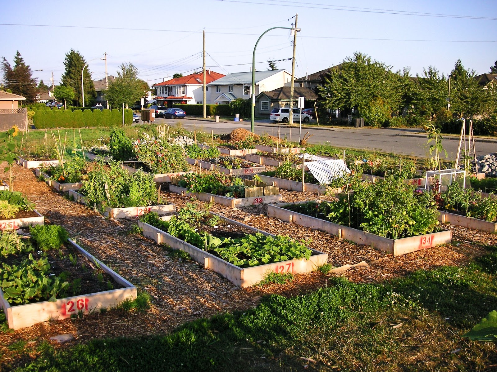 Benefits of community gardens that bloomin 39 garden for Garden and its importance