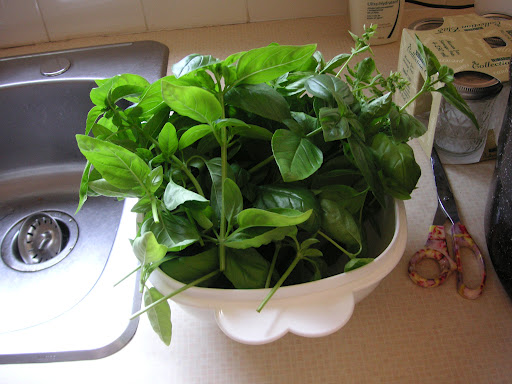 Herbs made Easy