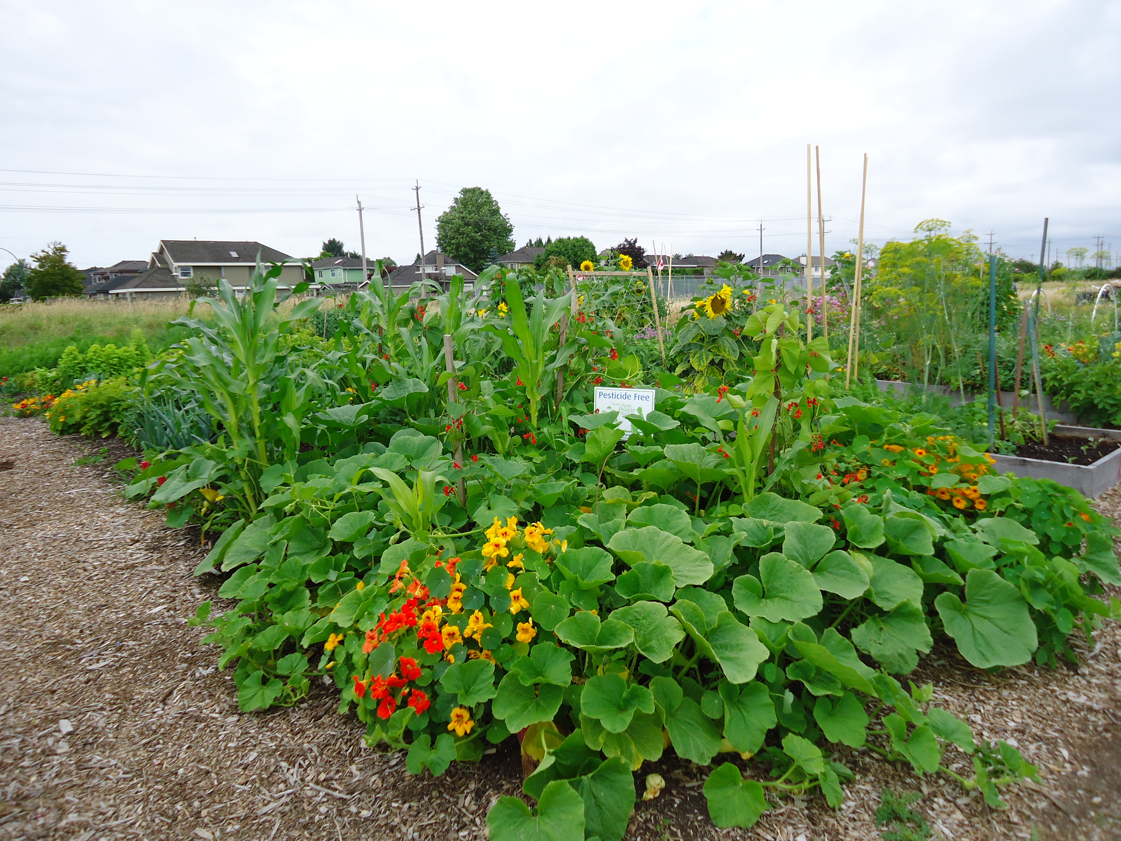 31 days of gardening with children day 25 that bloomin for Landscape gardeners
