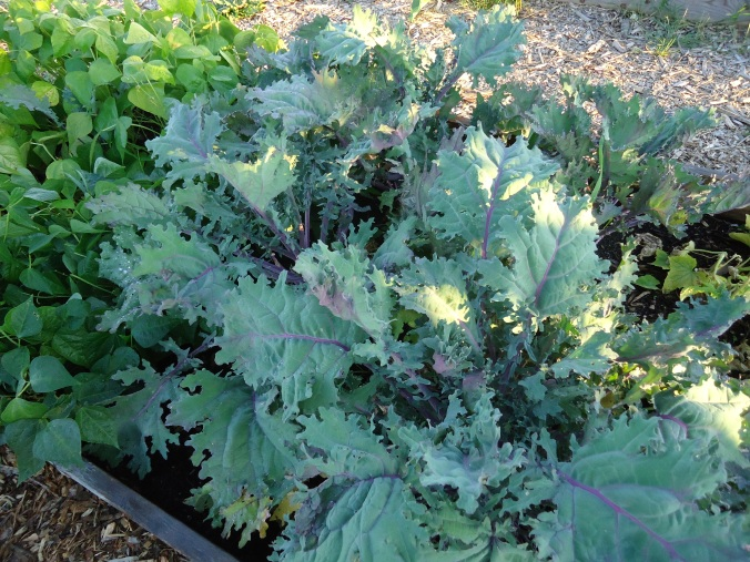 Growing Food for Winter Meals