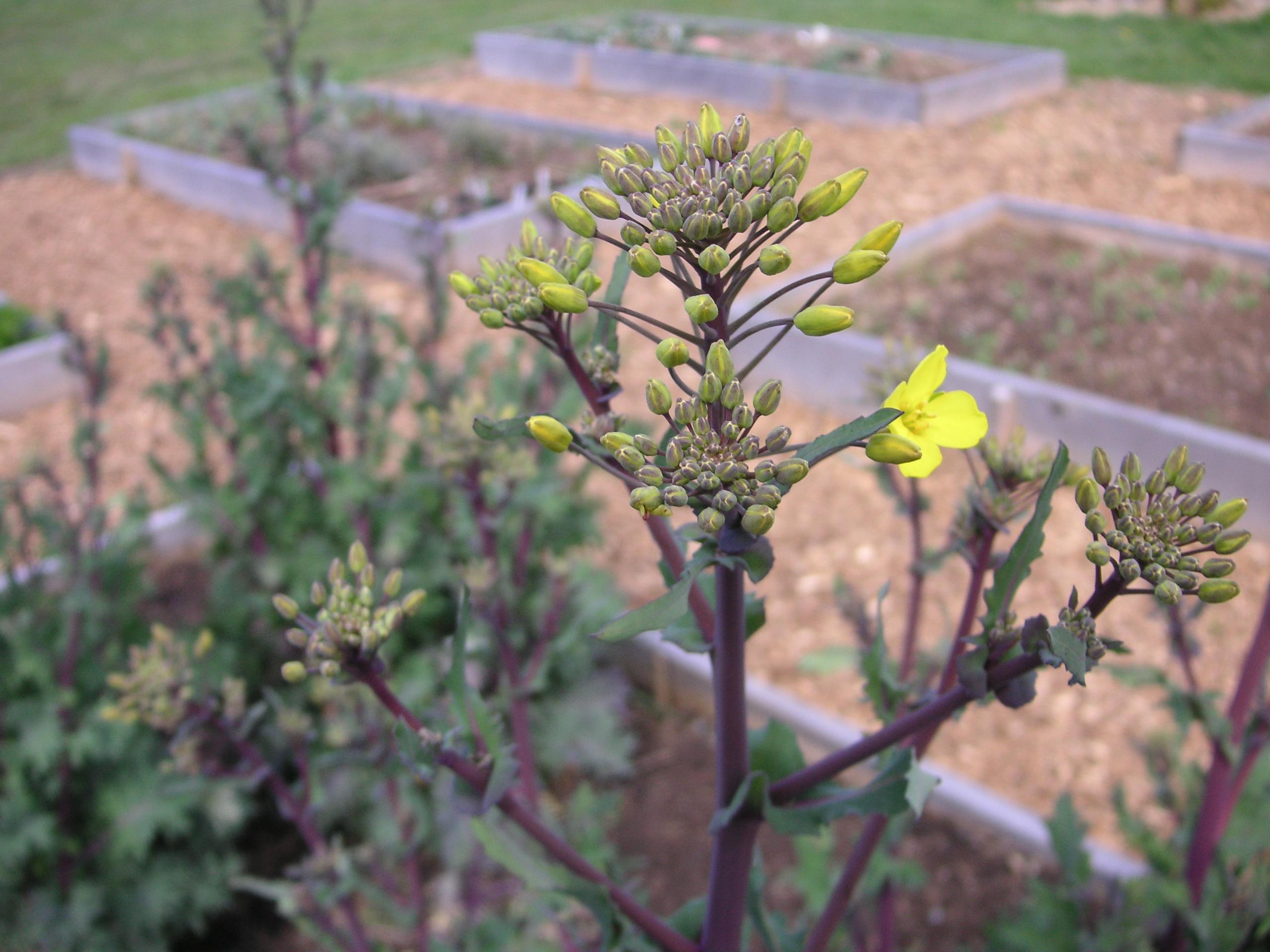31 Days Of Gardening With Children Day 12 That Bloomin