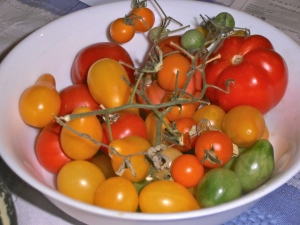 tomatoes from greenhouse