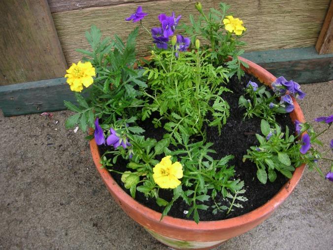 Its Garden Season, Where Do I Start?