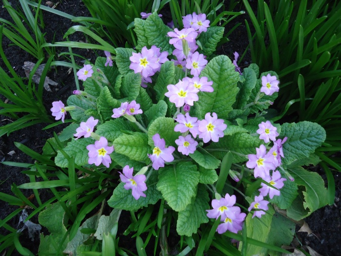 4 amazing plants for the garden