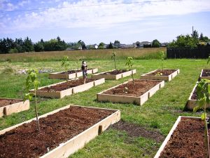 food bank garden