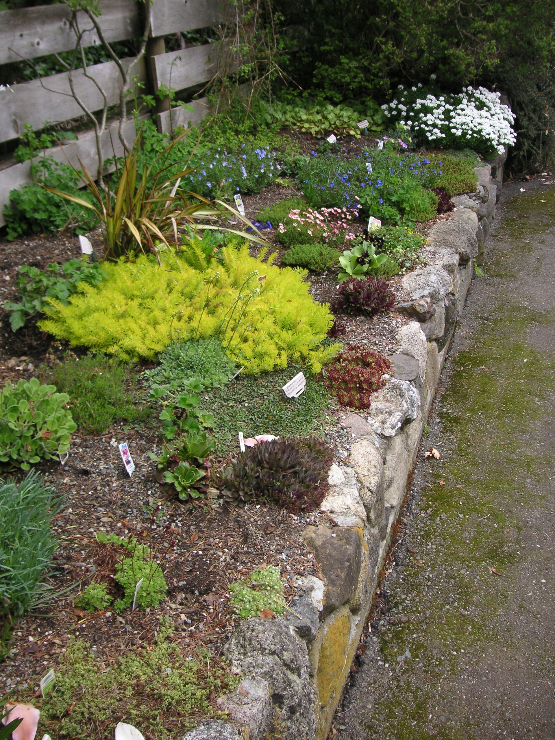 how to build a rock garden that bloomin 39 garden