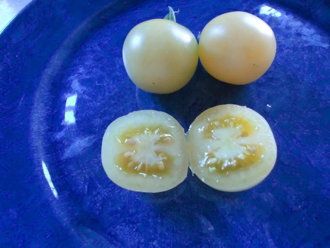 Snow white tomato