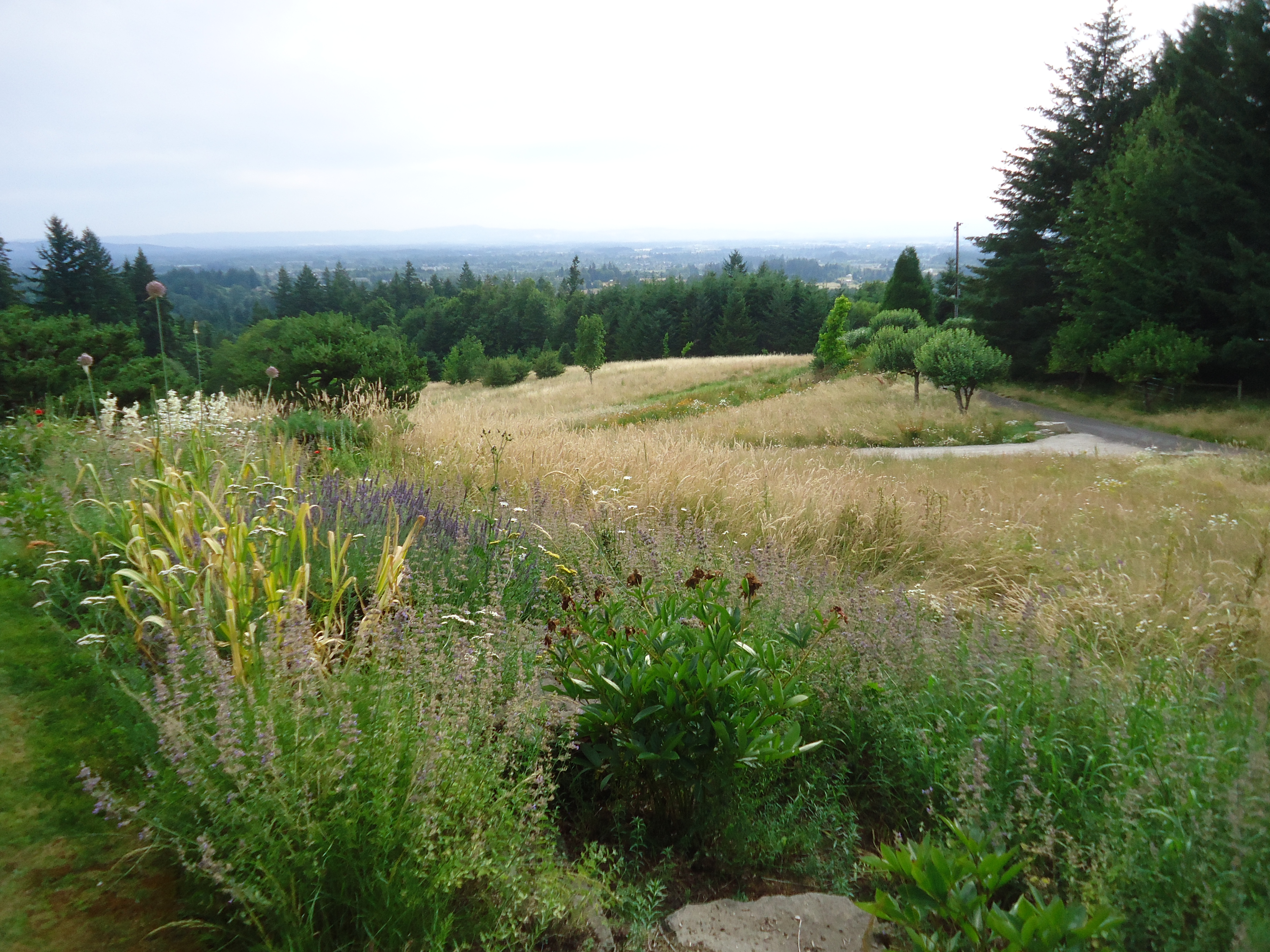 Westwind farm studio a natural garden that bloomin 39 garden for Natural grasses for landscaping