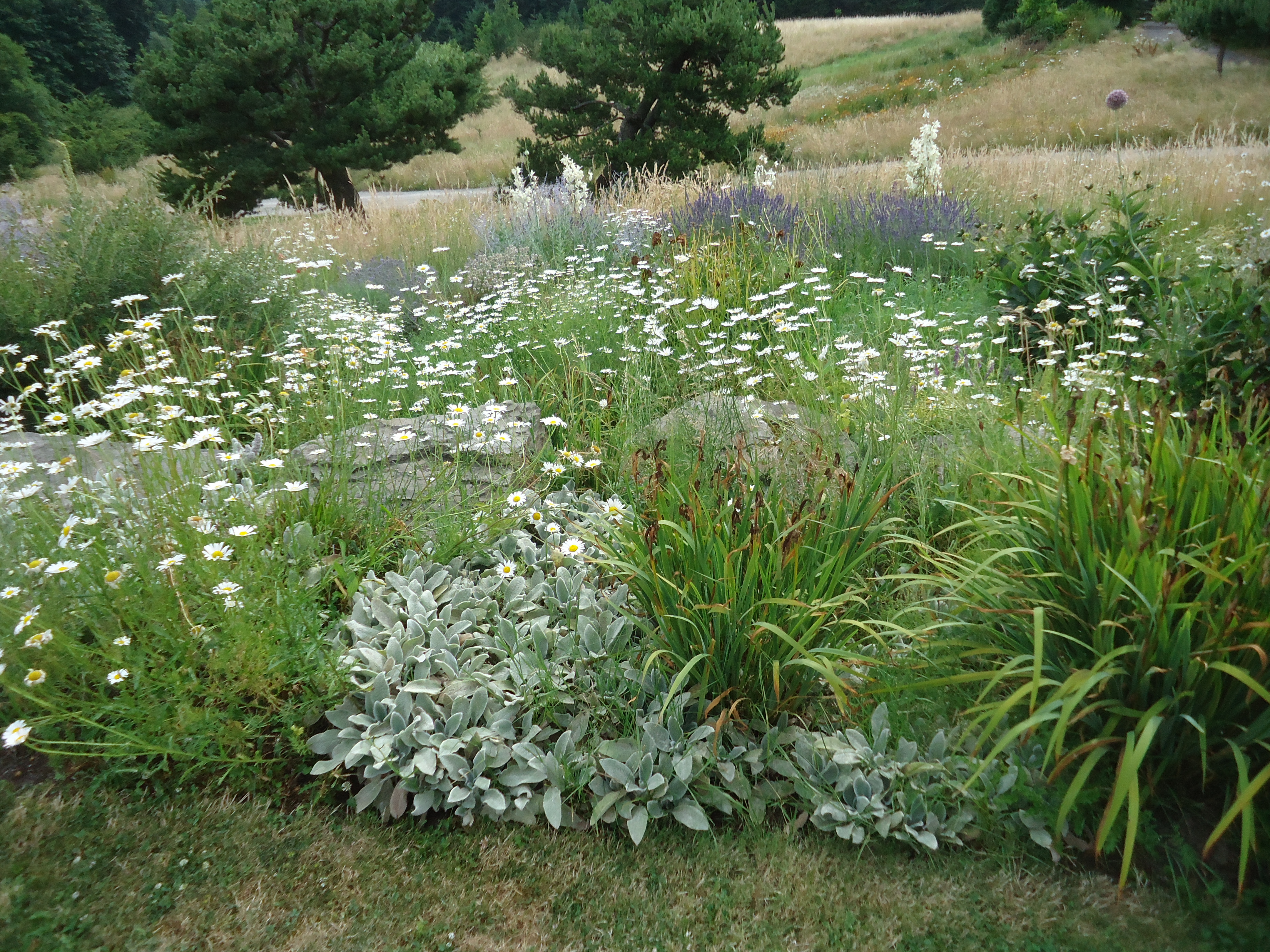 Westwind Farm Studio A Natural Garden That Bloomin 39 Garden