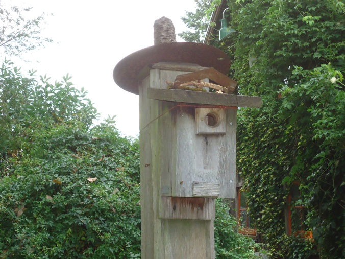 Bella Madrona birdhouse art
