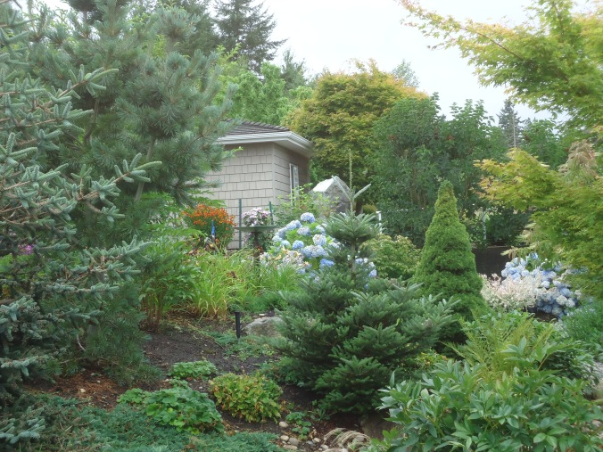 Point Roberts garden tour, conifer garden
