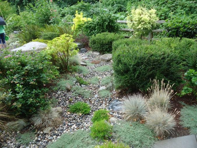 conifer garden, evergreens of pacific northwest,