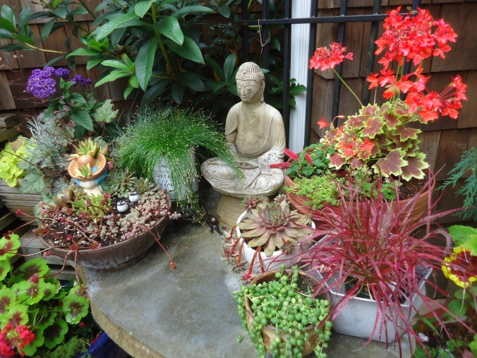 using reds in the garden, planting in containers,