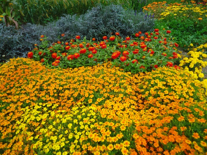 A day at the farm -marigold planting