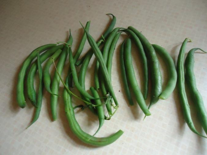 valentino bush beans