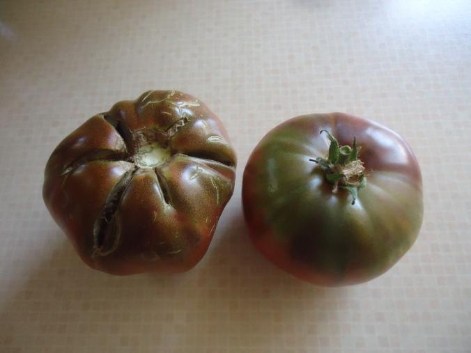 How to save cherokee purple tomato seeds