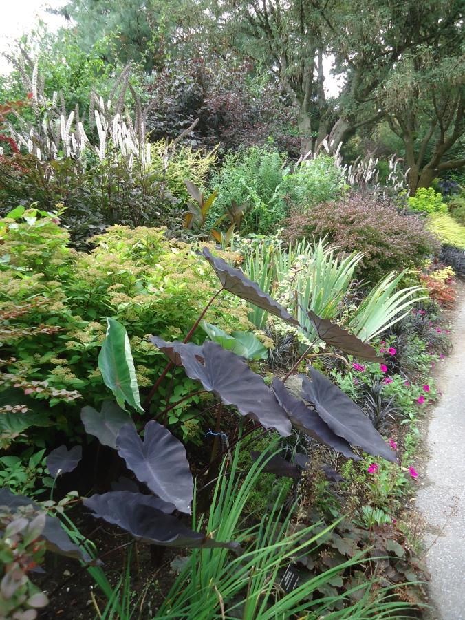 Black garden plants you can grow