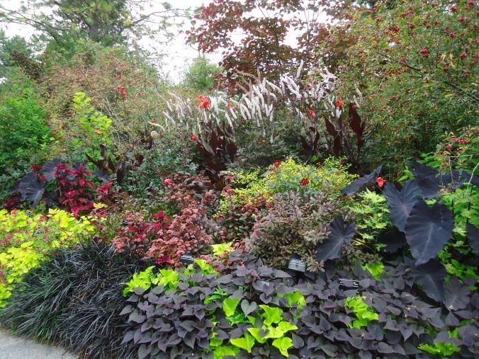 The black garden- VanDusen Botanicalgarden