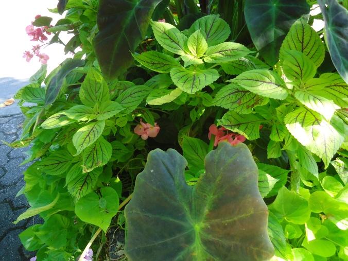 Loving Delta's fine foliage