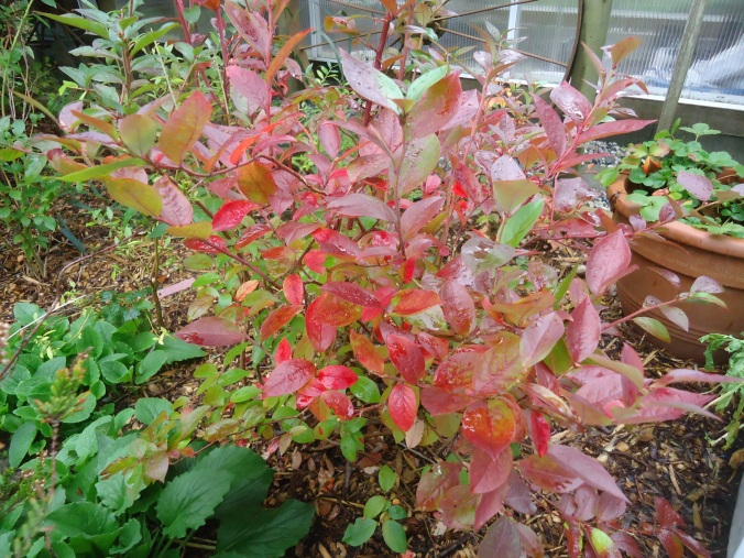7 great plants for fall colour