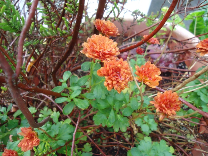 Look at whats blooming in November