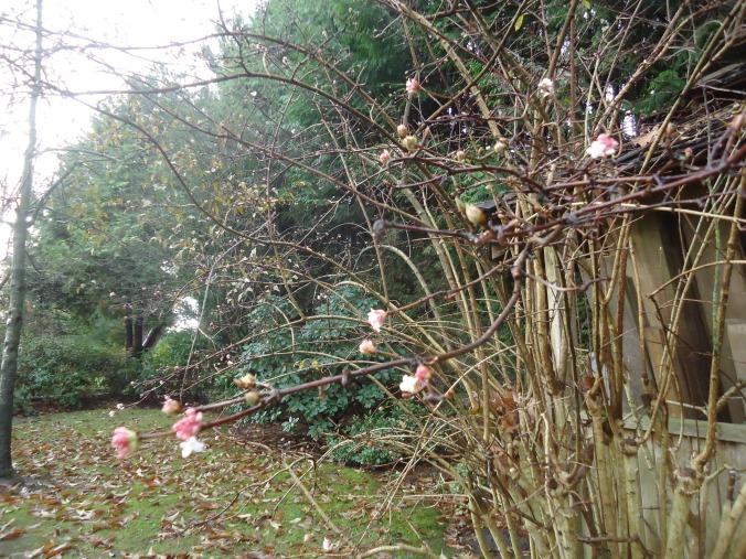 Fridays flowers in my November garden