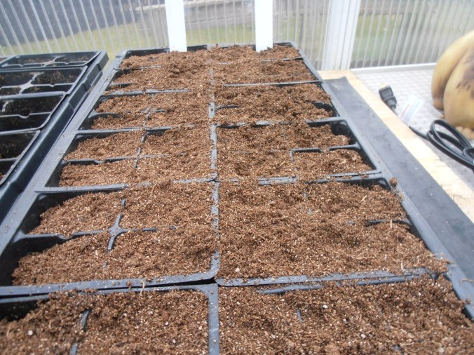 The first tomato seeds are planted!