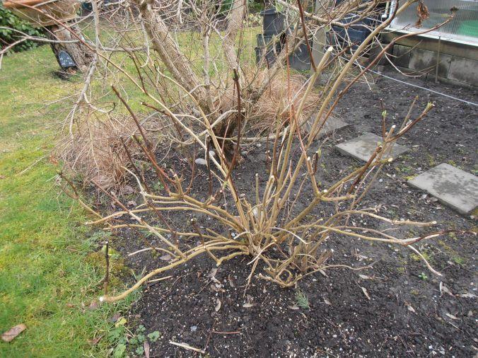 Garden to do List for February