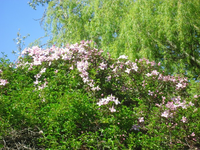 April's Flowers- A walk in the garden