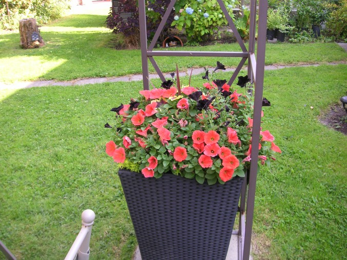 Planning my summer containers