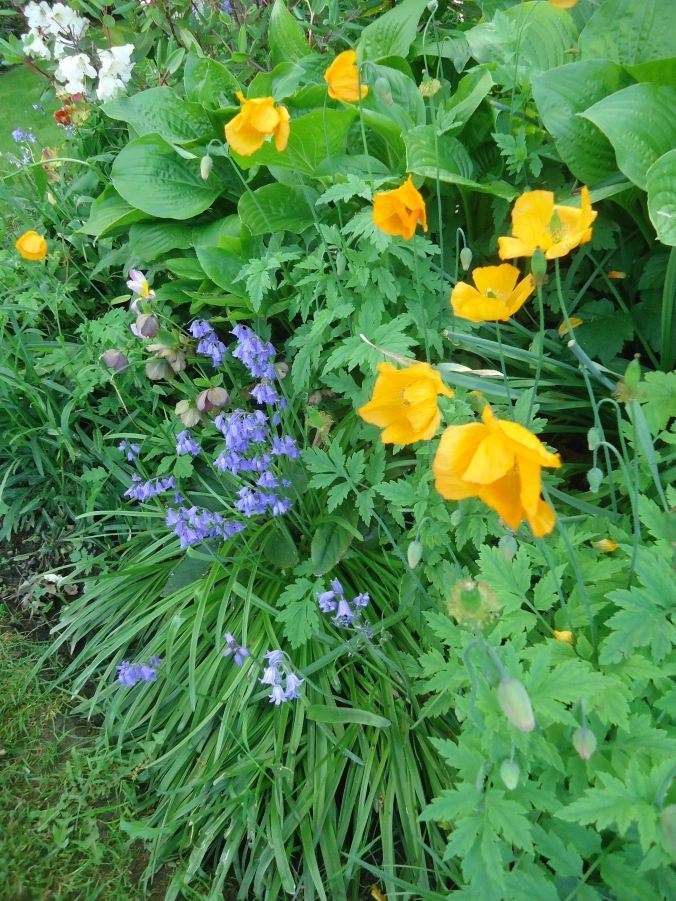 May flowers bring joy to the garden