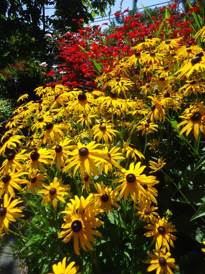 My Successes and Failures in the 2015 Flower Garden