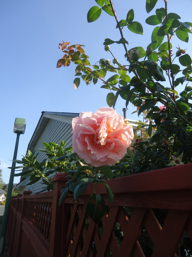 Ladner Gardens Beat the Heat with Beauty