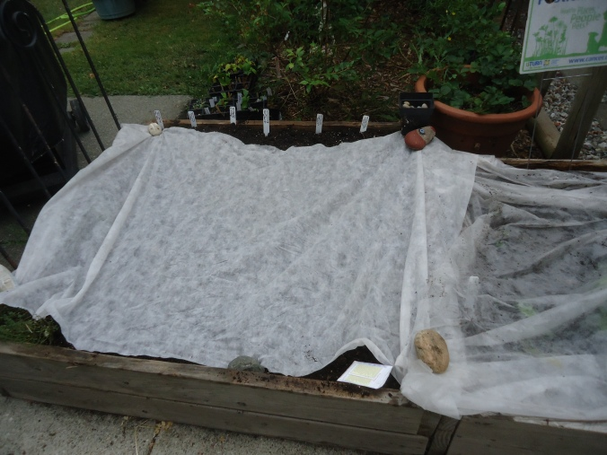 Planting the Fall and Winter Vegetable  Garden