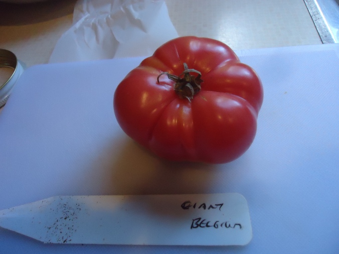 My Successes and Failures in the Kitchen Garden
