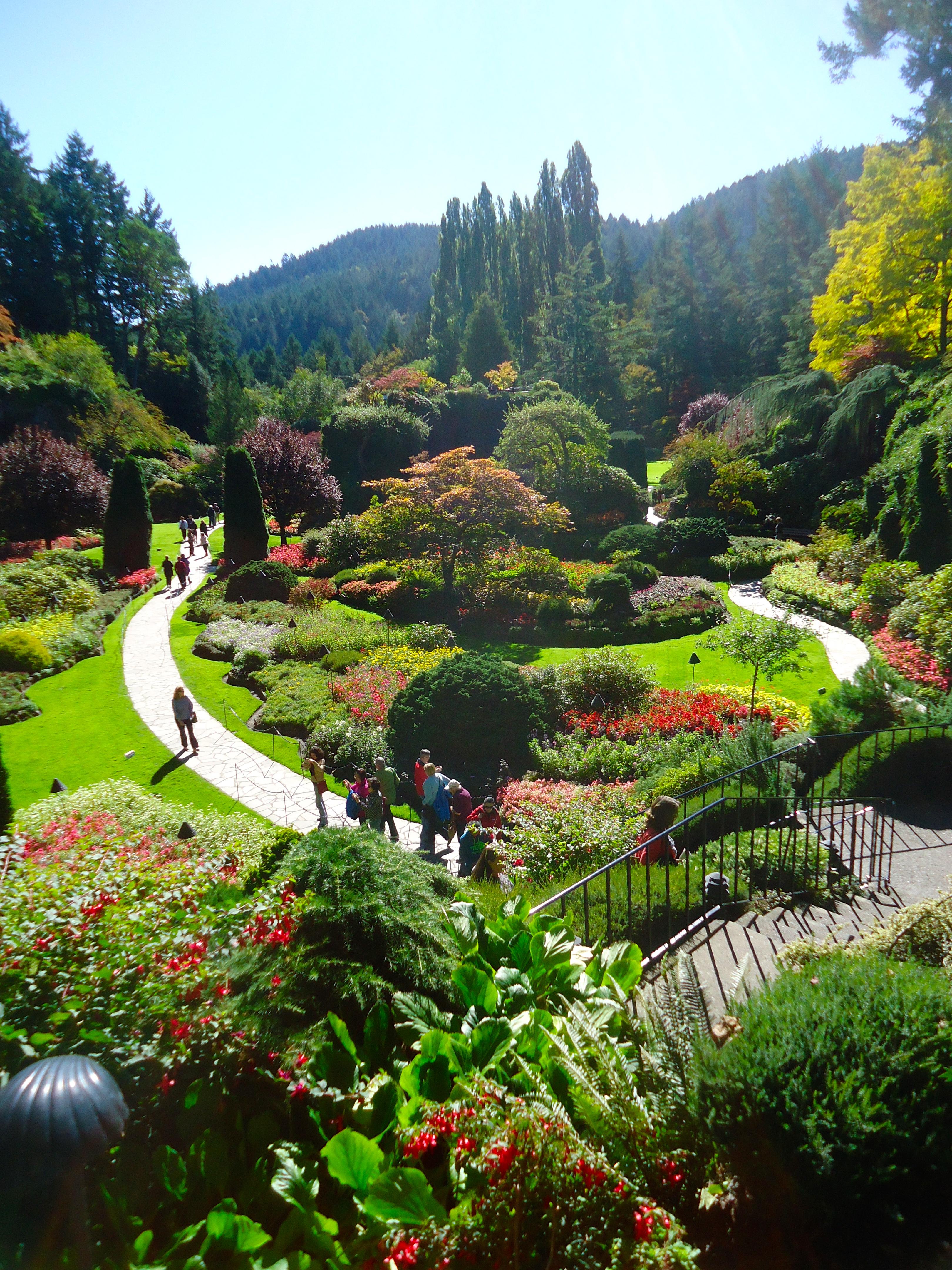 Ornamental Grasses Victoria Bc : September that bloomin garden
