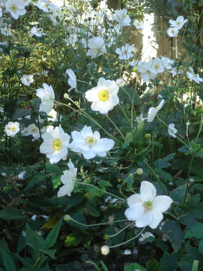 Abkhazi Garden -A Love Story
