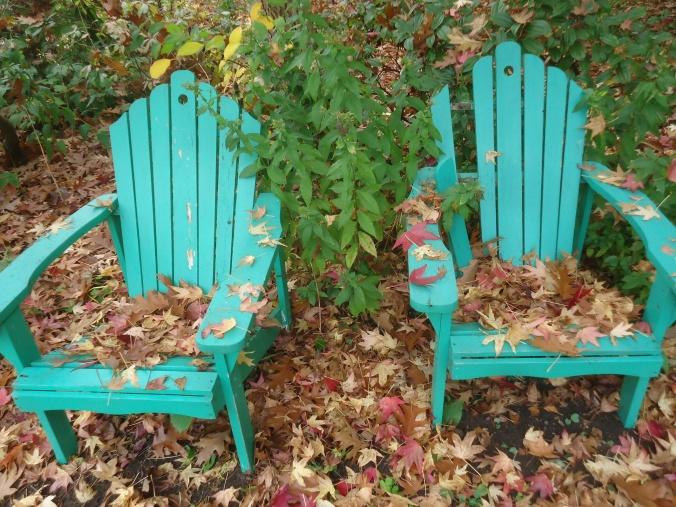 Loving Fall Colour