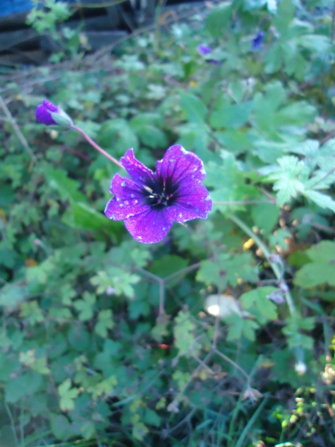 My November Blooms