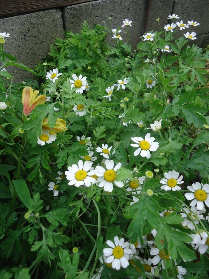 Garden Bloggers Bloom Day-November 2015