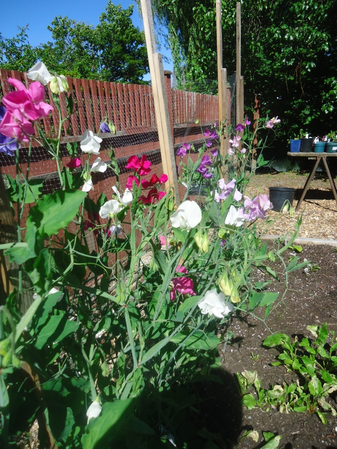 That Bloomin 39 Garden Gardening Is A Way Of Life