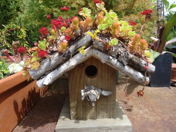 Building a Green Roof Bird House